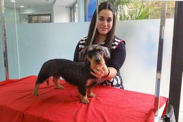 Perruqueria i estètica canina i felina