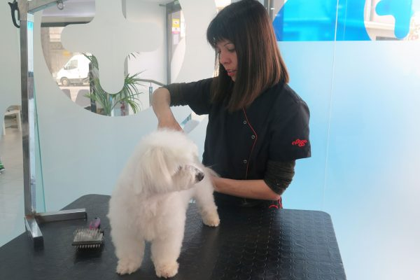 perruqueria i estètica Canina / Felina
