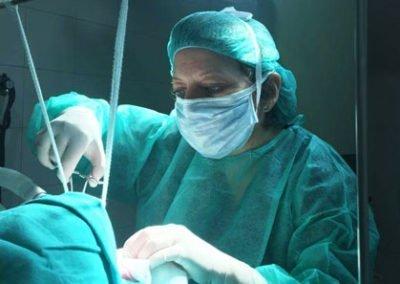 Correcció quirúrgica de les alteracions respiratòries dels gossos braquicèfals