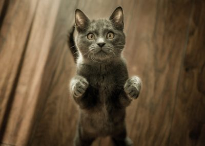 HYPERACTIVITY AND AGRESSIVENESS IN CATS