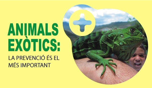 Animals exòtics