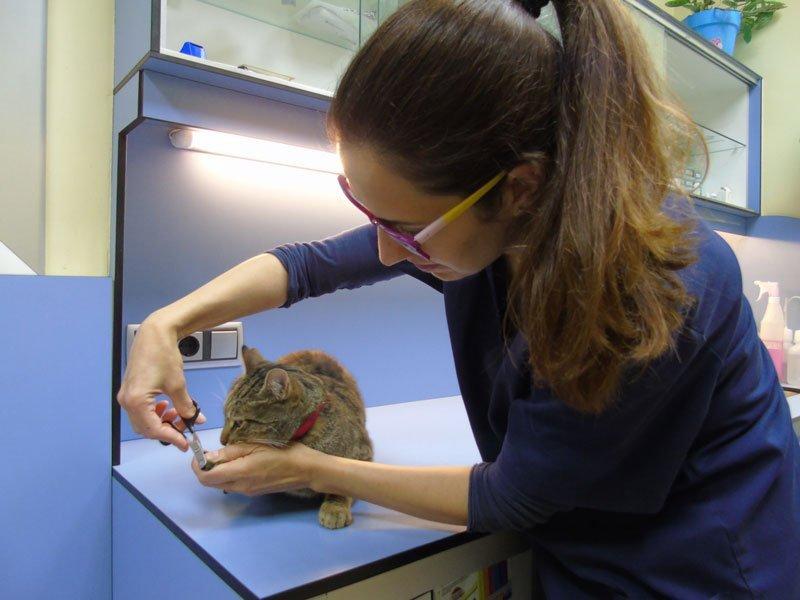 anoia-veterinària-masquefa-2