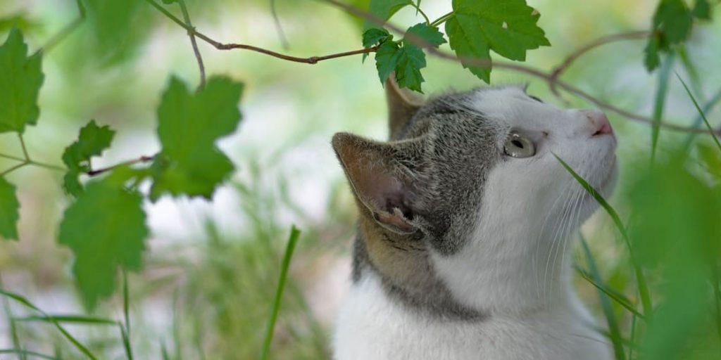 Plantas ornamentales tóxicas para gatos y perros