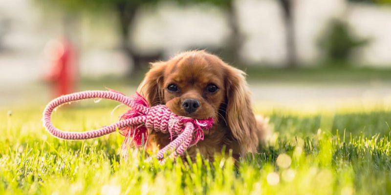 La dentición en cachorros