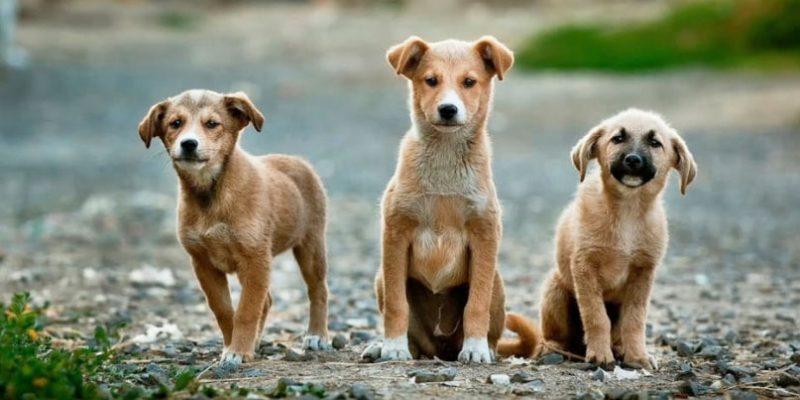 Fins quan creixen els gossos
