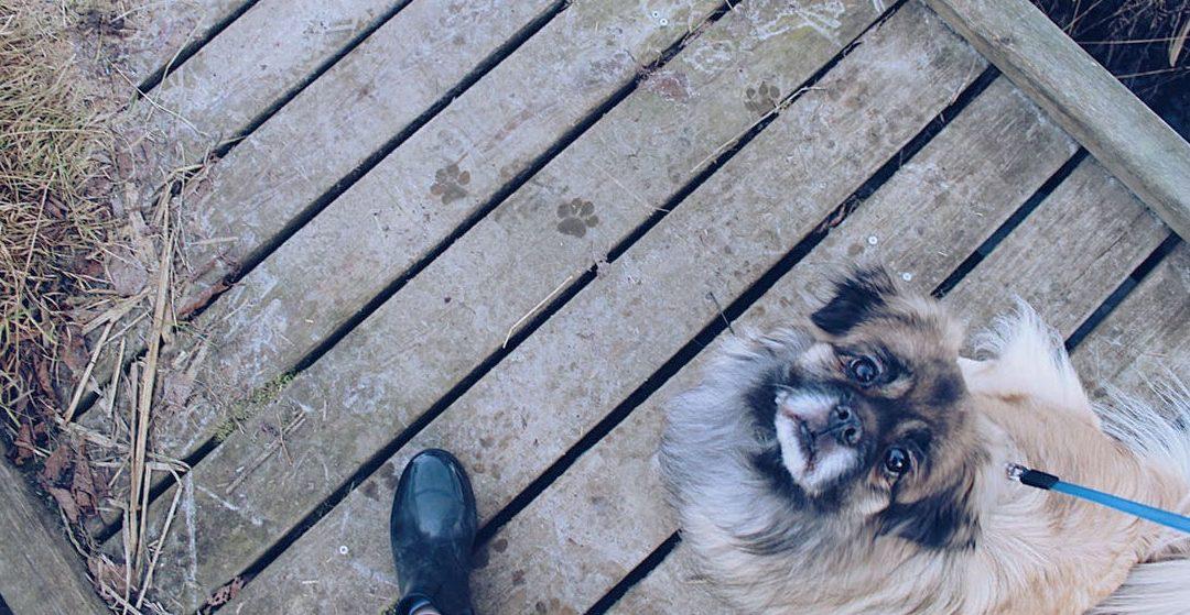 La coporfagia canina