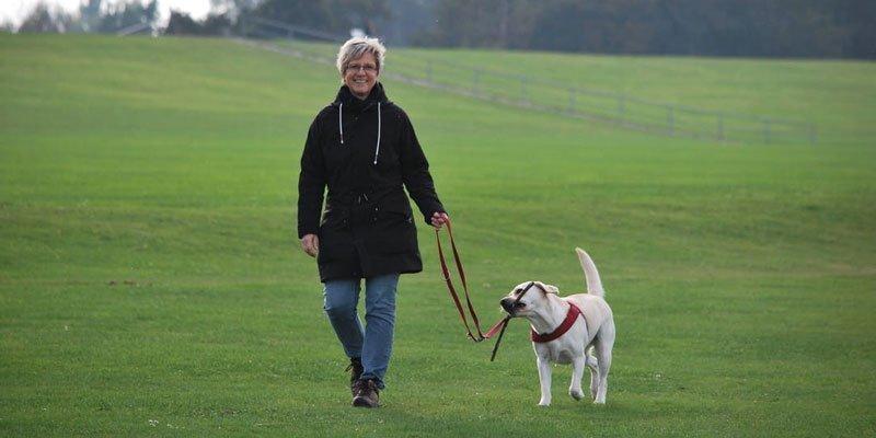 Tratamiento del cáncer en perros y gatos
