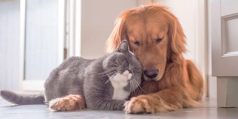 ¿Cuándo se puede esterilizar a una perra o gata?