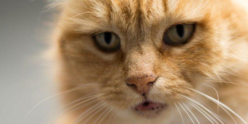 Els ulls en animals geriàtrics