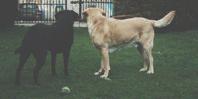 Castració en gats i gossos
