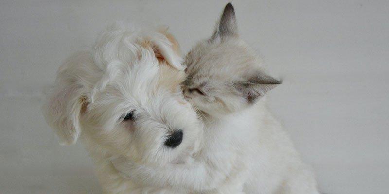 Assistències veterinàries HVC Pet Care