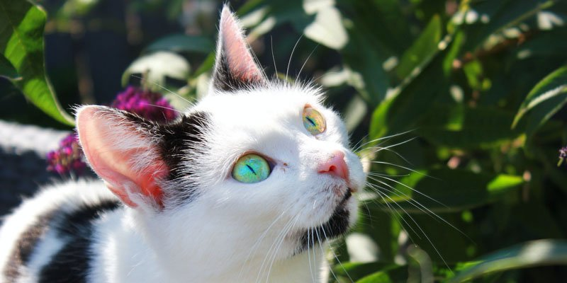 Plantas ornamentales tóxicas para perros y gatos