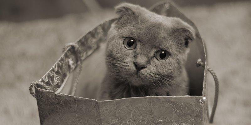 Vídeos con los métodos para introducir al gato en el transportín