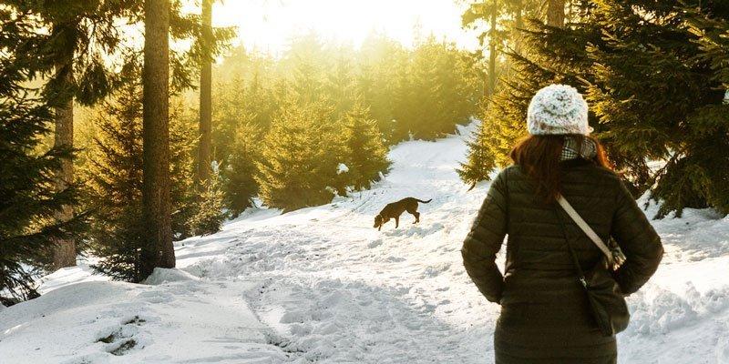 Consejos para ir con el perro a la nieve