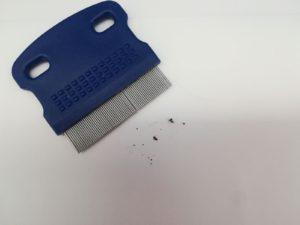 Peine especial para eiminar la alergia a la pica de la pulga DAPP