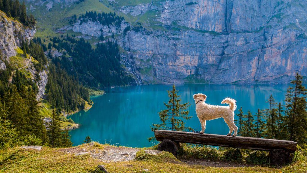 A la muntanya amb el meu gos