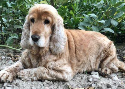Infestación por Sarna Sarcóptica en un perro
