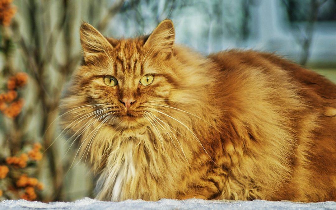 Revisions geriàtriques en gossos i gats