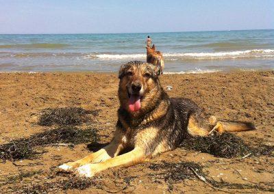 Arritmia cardíaca en un perro adulto