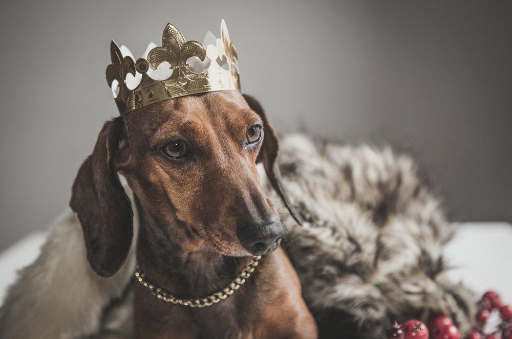 Los Reyes Magos también piensan en nuestros perros y gatos!