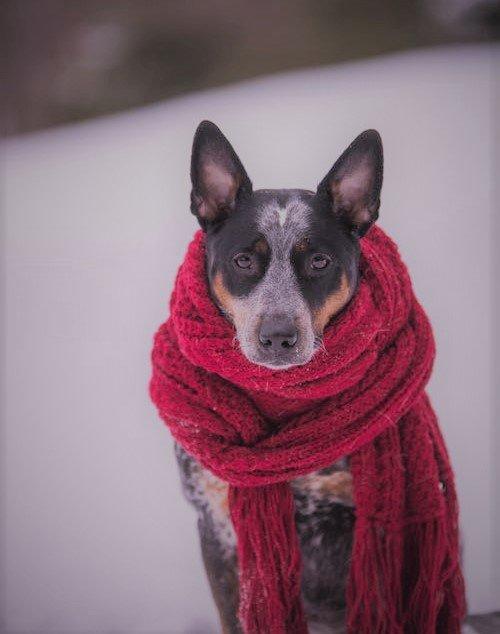 Els animals també tenen fred!