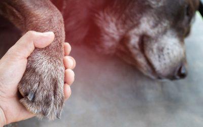 La eutanasia, juntos hasta el final