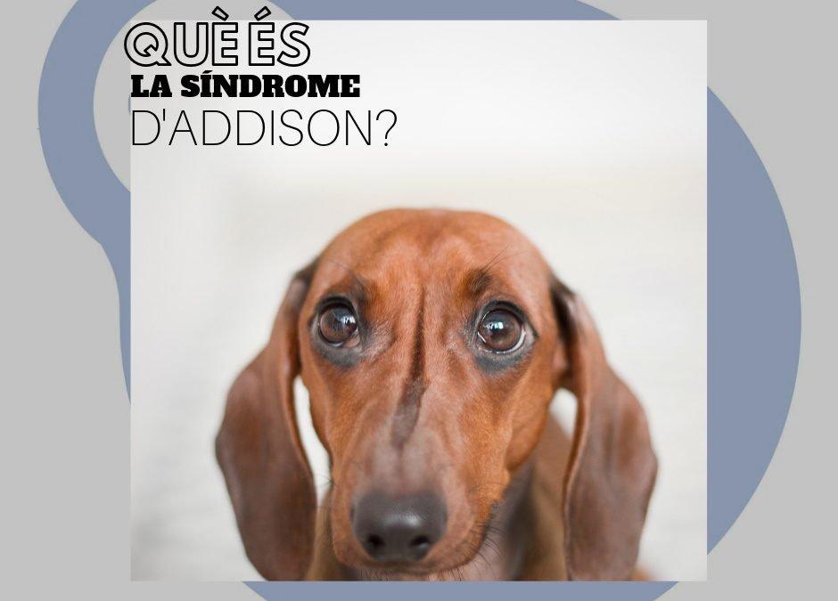 Síndrome d'Addison