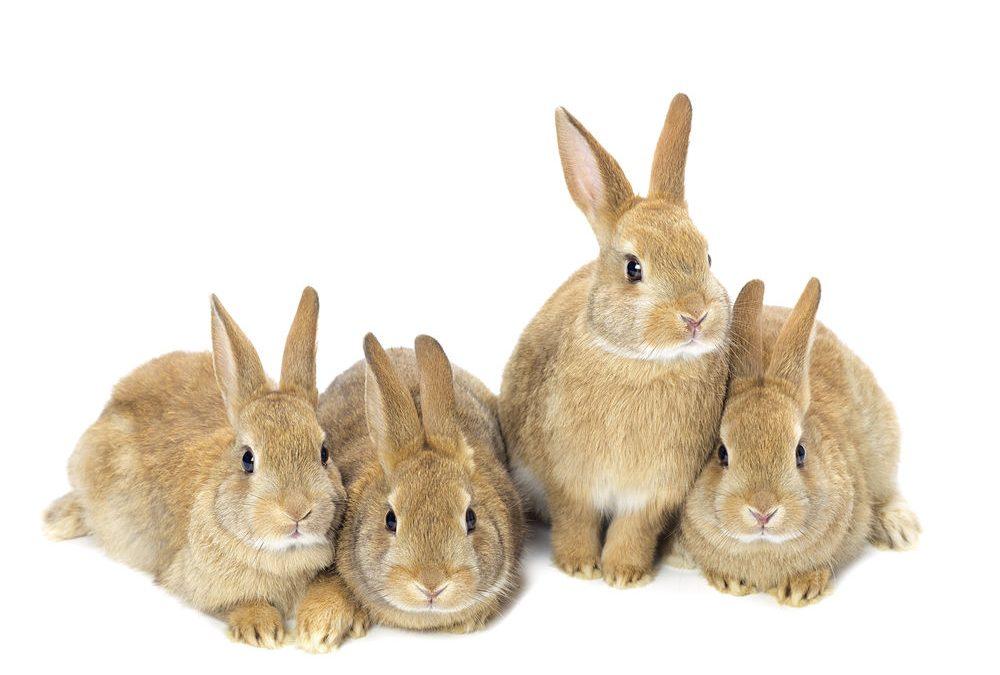 Menjar per a conills