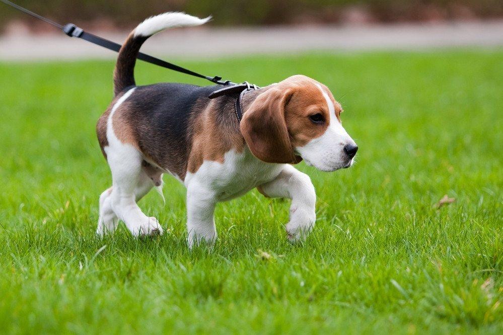 5 lugares para ir con tu mascota a desconectar