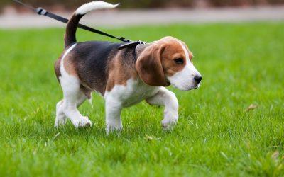 5 llocs per anar amb el teu animal de companyia a desconnectar