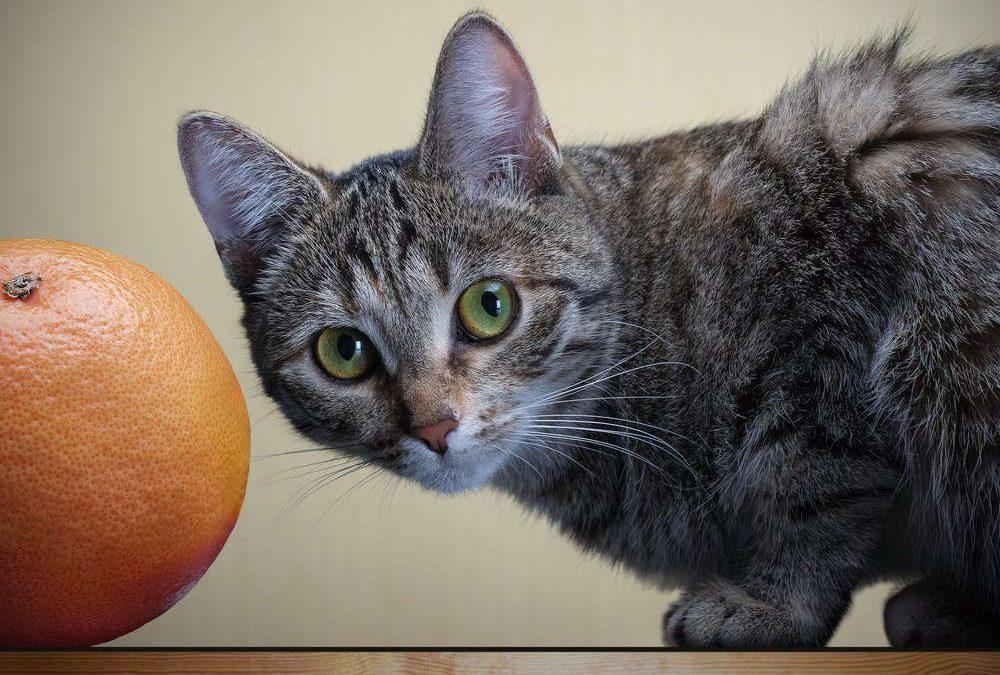 Fruites per gats