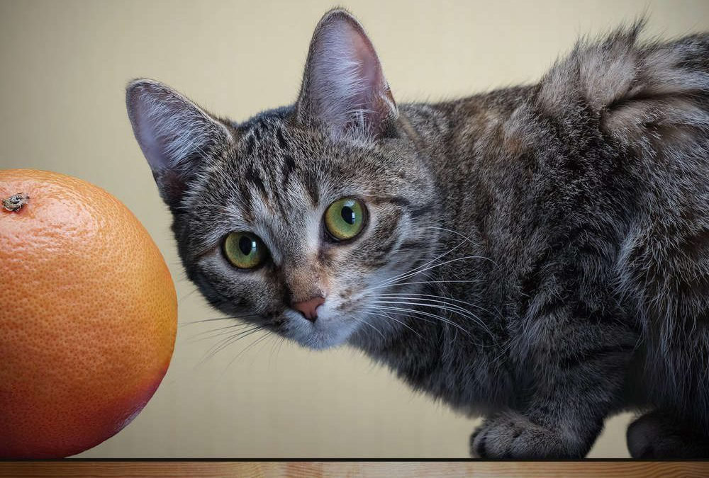 Fruites per gats - Frutas para gatos