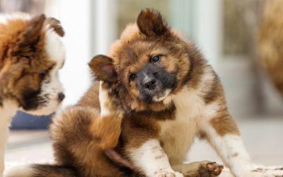 4 cosas que puedes hacer si tu perro pierde mucho pelo