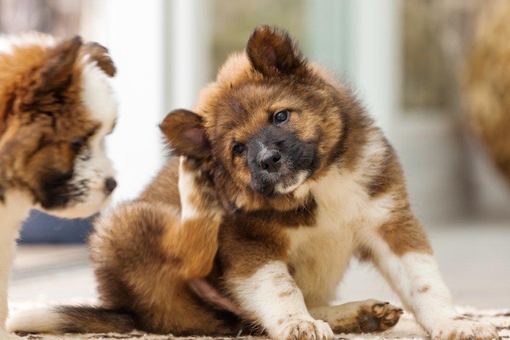4 coses que pots fer si el teu gos perd molt pèl