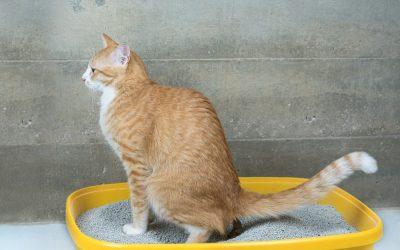 Tipus de sorra per a gats