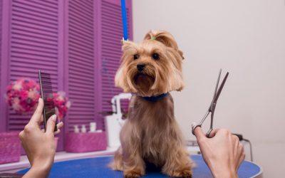 Races de gos a les que no se li pot tallar el pèl