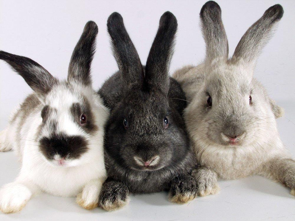 Tipus de fenc per a conills