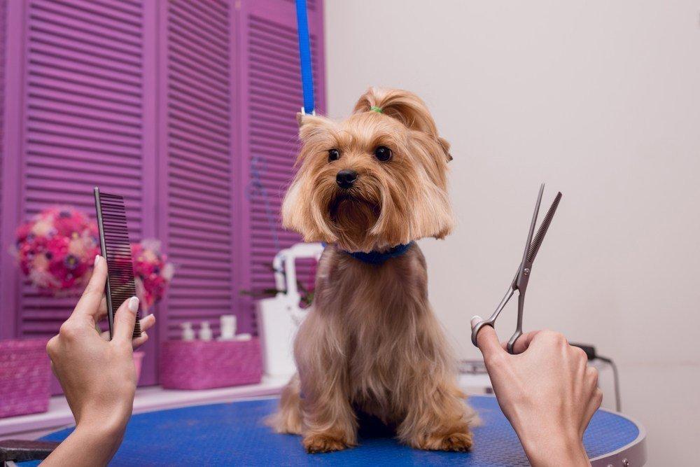 Razas de perro a las que no se le puede cortar el pelo