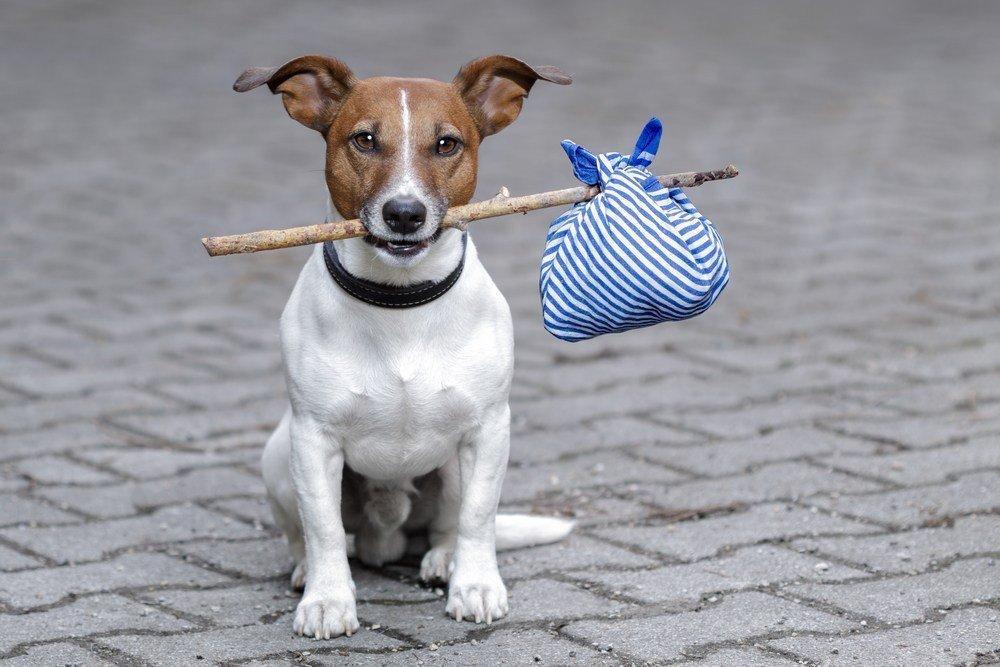 Viajes para hacer con perros