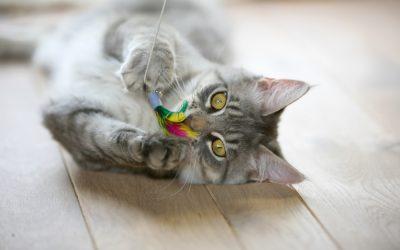 5 joguines per a gats que pots donar al teu gat