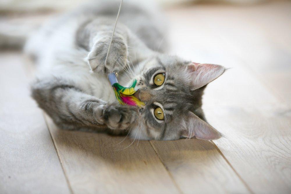 5 juguetes para gatos que puedes darle a tu gato