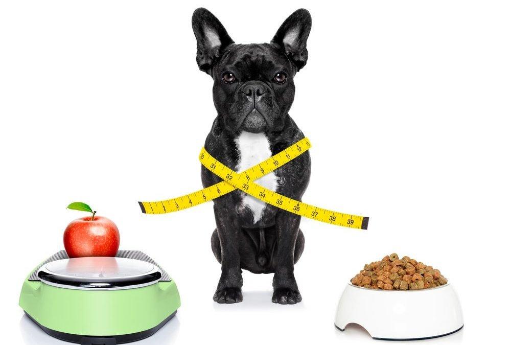 ¿Cómo evitar la obesidad animal en nuestros animales?