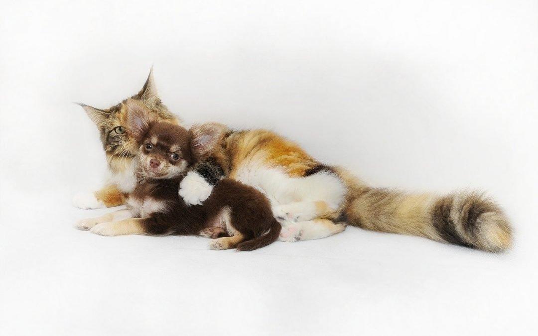 Etologia animals de companyia