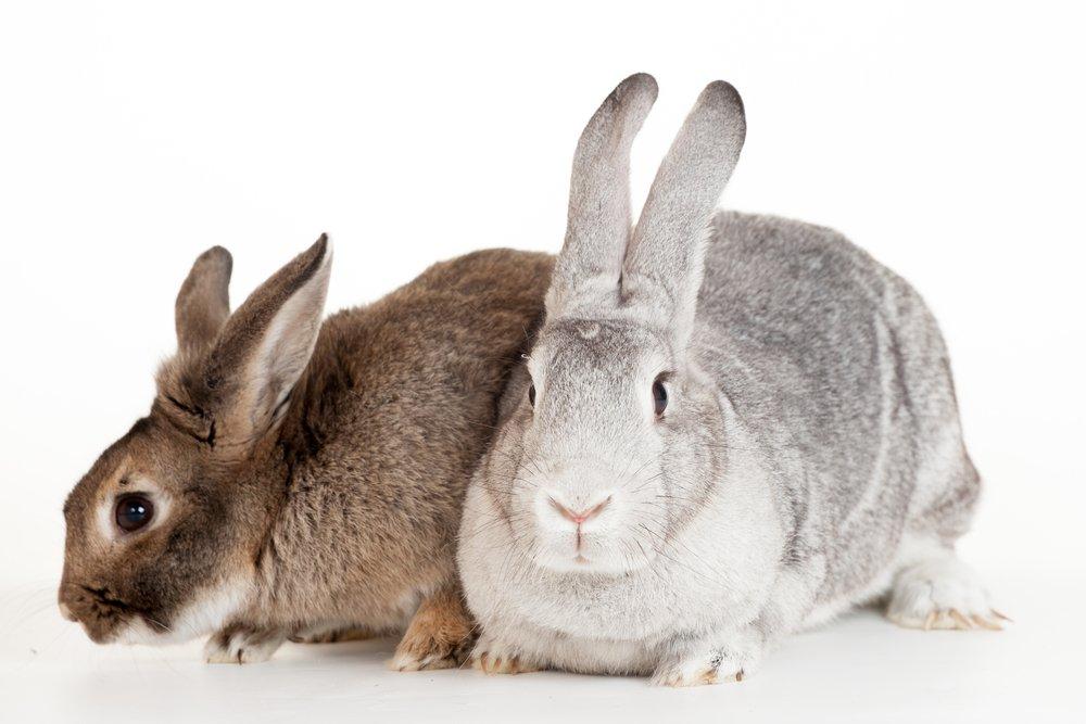 Los mejores juegos para conejos