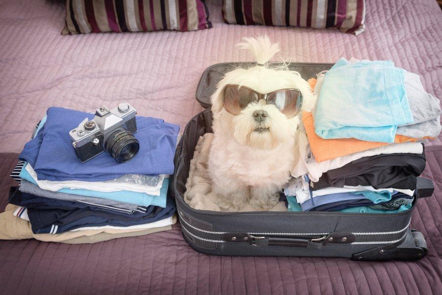 Viatjar amb gos