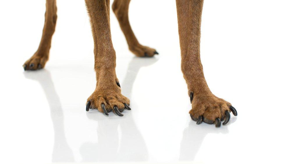 Artrosis en perros | Todo lo que debes saber