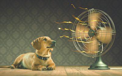Refrescar els gossos a l'estiu   6 consells a seguir