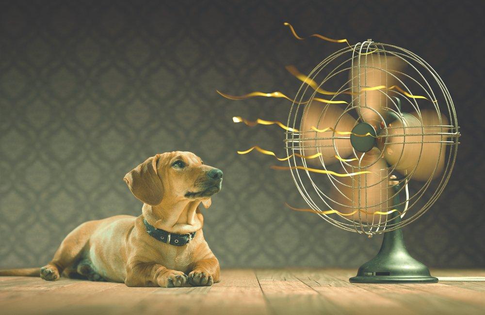 Refrescar els gossos a l'estiu | 6 consells a seguir