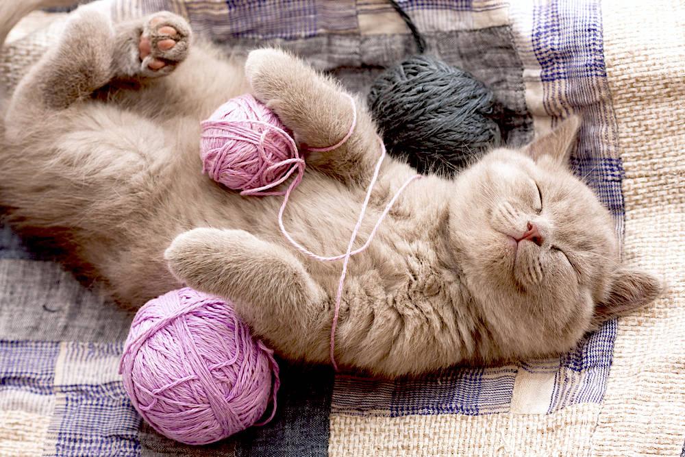 20 noms originals per a gats que t'encantaran