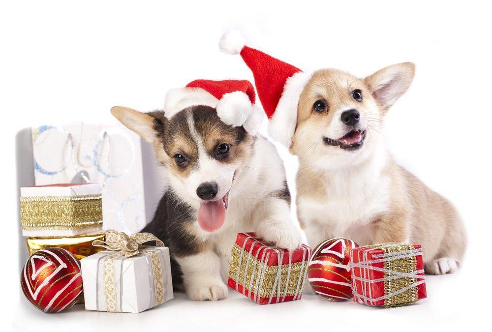 5 regalos para perros | Celebra la navidad con tu mejor amigo